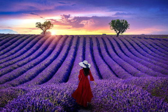 Woman walking in lavender field at sunset.