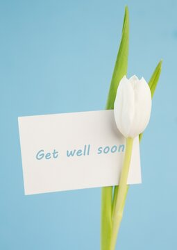 Composition of get well soon message card and white tulip on pale blue background