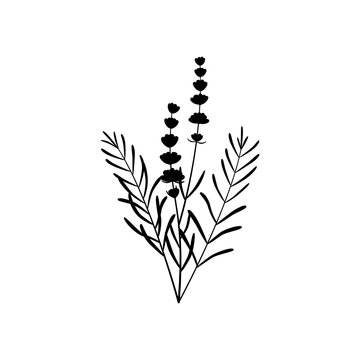 black silhouette lavender bouquet