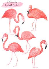 Wall Murals Flamingo Flamingo set