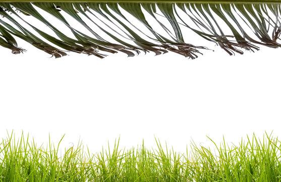 bordures d'herbes et de feuille de bananier