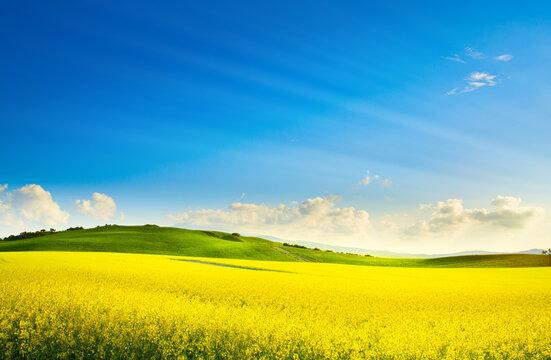 art springtime rural landscape. rape spring field and blue sky horizon