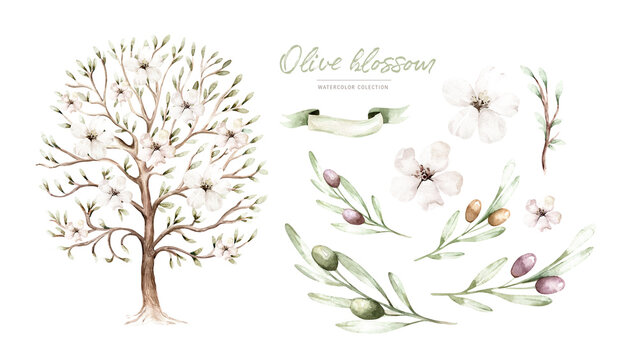 Watercolor Genealogical Family tree. Watercolor children's tree botanical season isolated illustration. olive, oak and cypress. Green forest ecology branch and leaves.