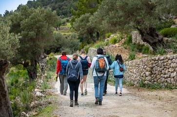 Fototapeta Wanderurlaub Mallorca - Wanderung zwischen Banyalbufar und Estellencs durch das Landgut, die Finca Planícia: Gruppe zwischen alten Olivenbäumen