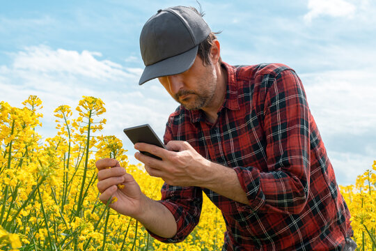Farmer taking photograph of blooming rapeseed crop with mobile smart phone