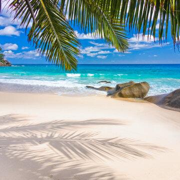 Palmes et reflets sur plage paradisiaque des Seychelles