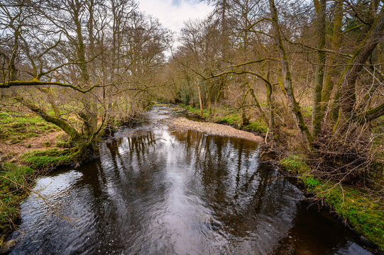 Devils Water flows through dense woodland, a river in Northumberland and is a tributary of the River Tyne, the confluence is between Hexham and Corbridge