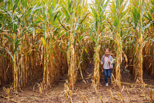 Smiling girl playing while running at corn field