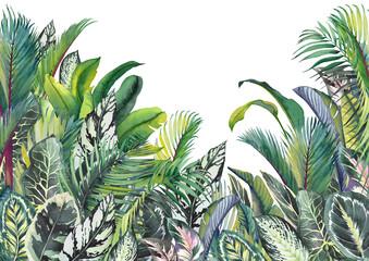 Fototapeta Tropical leaves jungle wall art. Watercolor illustration. obraz