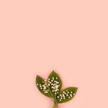 Lilly of the valley Convallaria majalis bouquet May spring flower on pink background