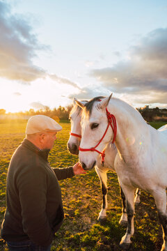 Mature animal trainer consoling horse while standing in ranch during sunset