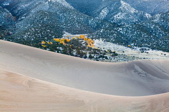 Ridges of sand frame yellow aspen and mountains dusted with snow in Great Sand Dunes National Park, Colorado.