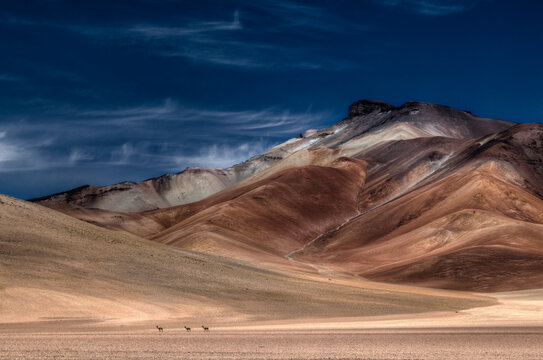 The Vicugna is an endangered species of the Lama family, shot here from afar in the wide open and other worldly and volcanic Eduardo Avaroa Andean Fauna National Reserve in south west Bolivia.