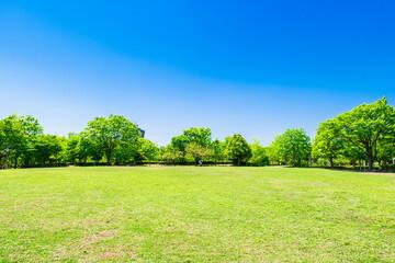 Fototapeta 新緑の公園広場
