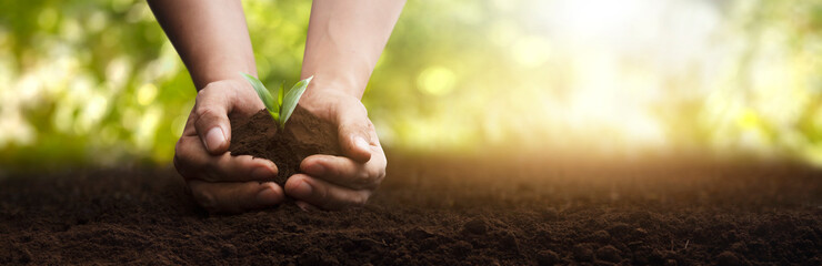 Fototapeta panoramic - man planting a small plant caring for the environment obraz