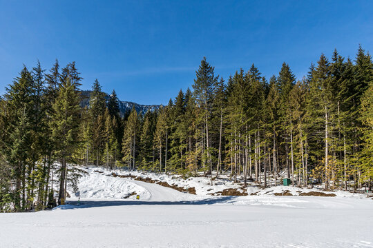 wintry landscape scenery with modified cross country skiing way in evergreen forest British Columbia Canada