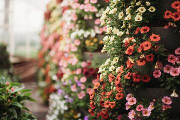 Obraz kwiaty ogrodnictwo - fototapety do salonu