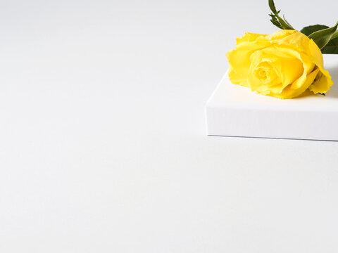Yellow rose on white cube podium on gray geometric background.