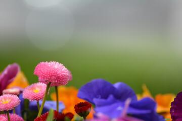 Obraz Kolorowe kwiatki wiosenne na tło.  - fototapety do salonu