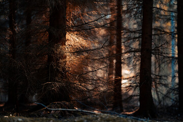 Obraz Dark eerie forest with sunlight hitting leaves - mystical forest background - fototapety do salonu