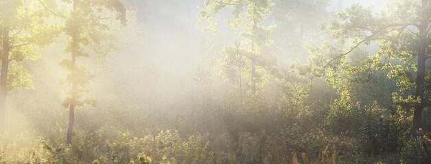 Fototapeta Mysterious evergreen forest at sunrise. Golden sunlight, sunbeams, fog, haze. Pine and fir trees close-up. Light flowing through the tree trunks. Picturesque scenery. Idyllic landscape. Pure nature obraz