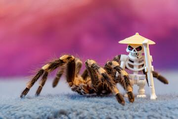 pająk