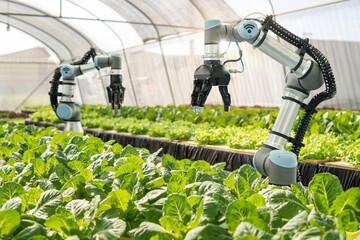Fototapeta Smart farming agricultural technology Robotic arm harvesting hydroponic lettuce in a greenhouse obraz