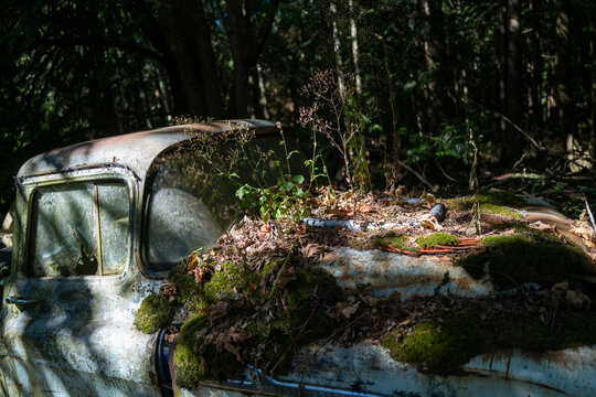 An abandoned old truck covered in moss in the forest