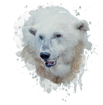 Digital Painting of Polar Bear