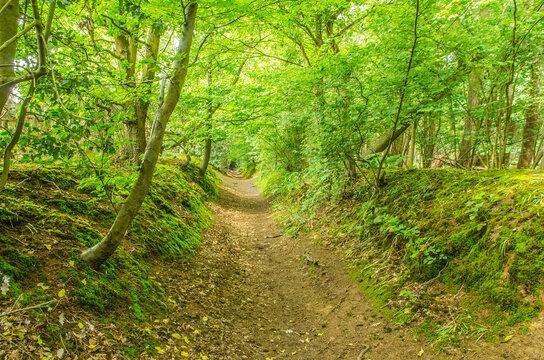 Sunken pathway in Surrey England