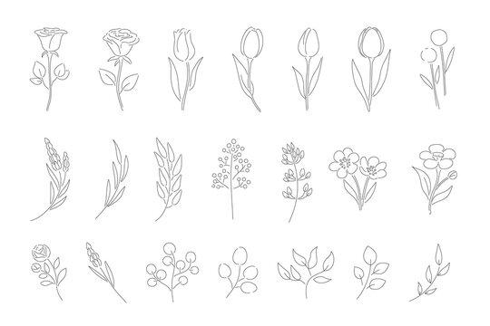 草花のシンプルなラインアート
