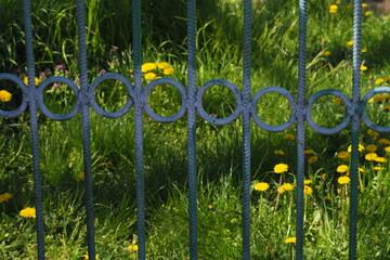 Metalowy płot z kółkami na tle trawy z dmuchawcami - fototapety na wymiar