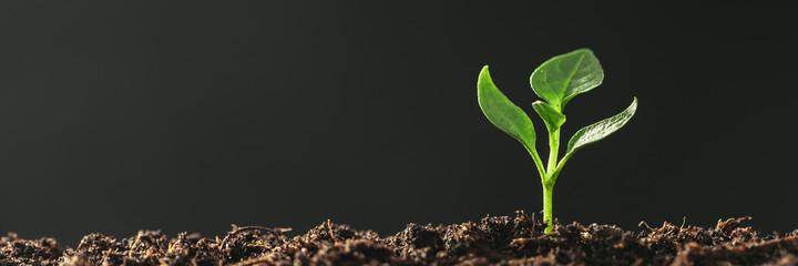 Obraz Green seedling growing on the ground in the rain - fototapety do salonu
