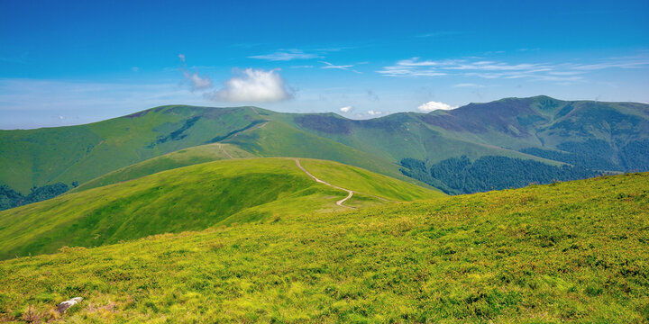 alpine mountain meadow in summer. beautiful landscape of carpathians on a bright sunny day at high noon