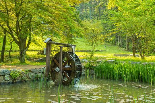 Waterwheel on the pond