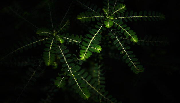 green leaves in the dark