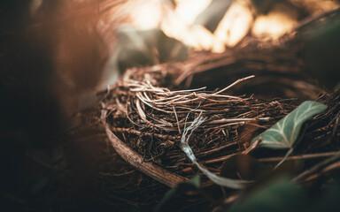 Fototapeta Ptasie gniazdko w blasku słońca