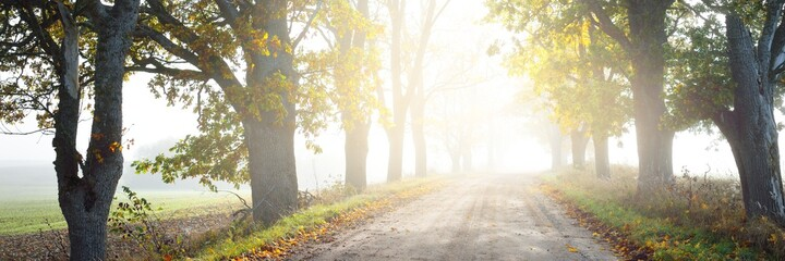 Fototapeta Single lane rural road (alley) through deciduous oak and maple trees. Natural tunnel. Sunlight, sunbeams, fog, shadows. Fairy autumn scene. Hope, heaven concepts. Nature, ecology, walking, cycling obraz