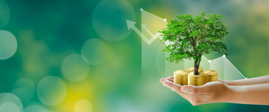 Hand holding Growing tree on coins with stock graph over Green background. Saving ecology, csr green business, business ethics, good governance, investment ideas, and business growth Concept.