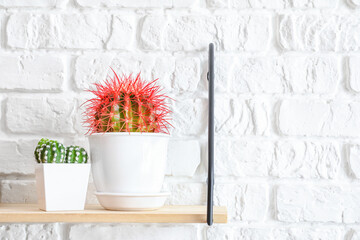 Shelf with cacti hanging on brick wall