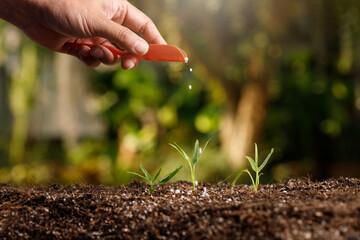Fototapeta Gardener hand nurturing young vegetable sprout in fertile soil obraz