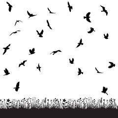 Fototapeta vector, isolated flock of birds flying