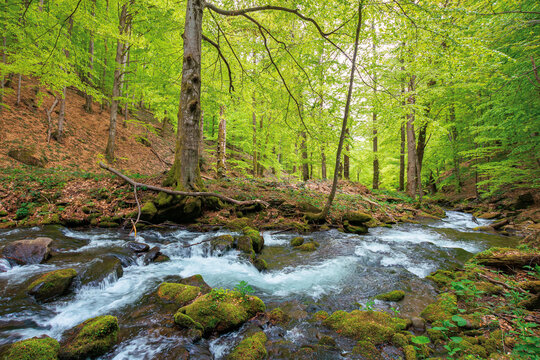 beautiful scene in a birch forest with river stream