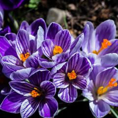 Fototapeta Wiosna i kwiaty obraz