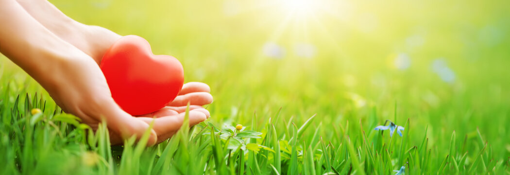 Woman hands holding red heart shape on the green grass background.