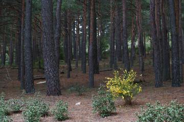 Obraz kwiaty drzewa natura widok zieleń wiosna - fototapety do salonu