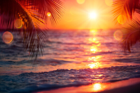 Blurred Sunset On Sea With Palm Leaves - Abstract Defocused Summer Vacation Background