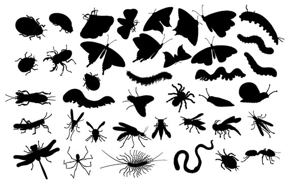 A large set of insects. Black silhouette - butterflies, caterpillars, spiders, aphids, wasps, bees, mosquitoes, beetles, worms, dragonflies, snails, flies, ants, grasshoppers and slugs.