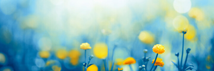 Fototapeta spring meadow with flowers obraz