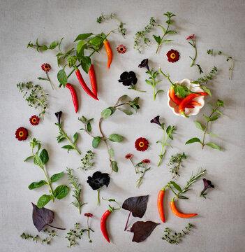 Zutaten aus dem Garten, Chili, Blüten, Kräuter als Flatlay